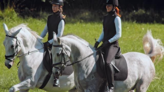 vídeos de stock, filmes e b-roll de slo mo ts dois cavalos brancos cantering com seus dois pilotos em um dia ensolarado - montar um animal