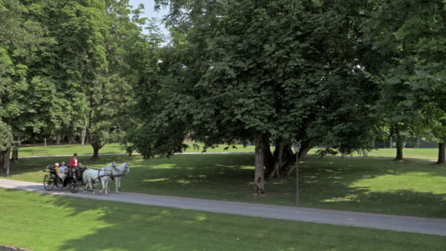 aerial two white horses pulling a carriage through park - carriage stock videos & royalty-free footage