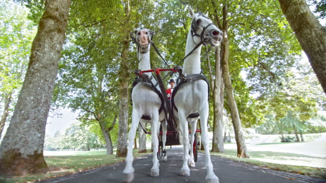 ts two white horses pulling a carriage through the park - two animals stock videos and b-roll footage