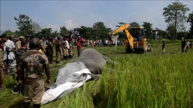 Two wild elephants including are found electrocuted in a paddyfield in Rakamjote near the India Nepal border where villagers had erected electric...