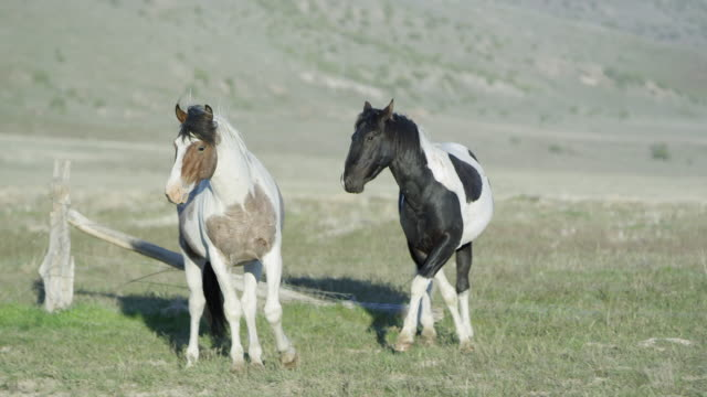 Two will horses standing then start running