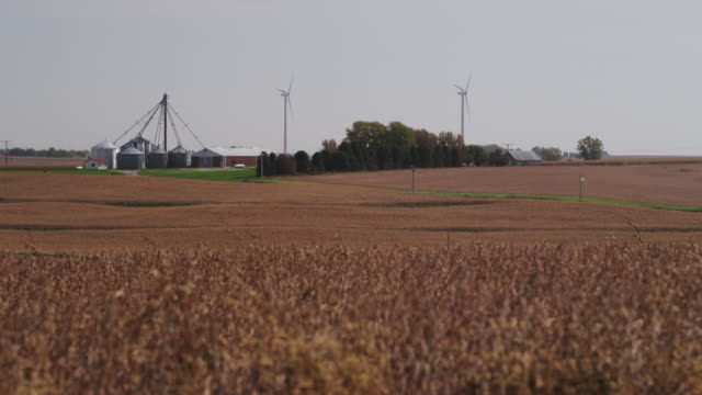 Two wind-powered, electricity-generating wind turbines are nestled with a farm in a rural landscape and a field of corn rustles in the foreground.