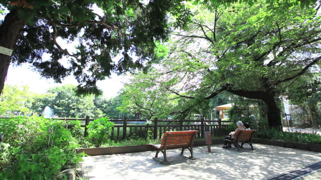 ms two woman sitting on bench in park / setagaya-ku, tokyo, japan - 服装点の映像素材/bロール