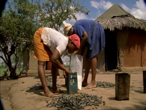 vidéos et rushes de wa two women by hut with caterpillars being dried and cooked, botswana, africa - arbre tropical
