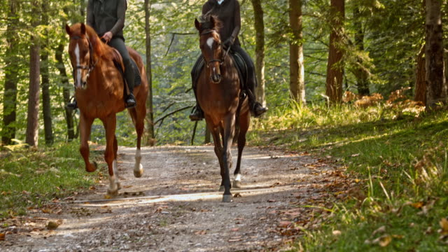 slo mo td two women cantering on brown horses through forest - recreational horseback riding stock videos & royalty-free footage