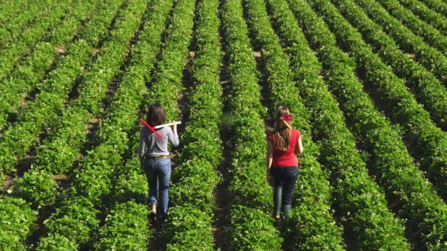 WS HA Two women carrying gardening tools walking through green field of woodland strawberries (Fragaria vesca) / Malaga, Spain