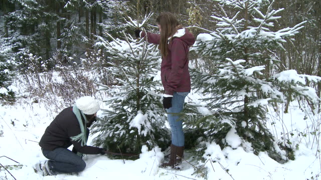ms two women cutting christmas tree / saarburg, rhineland-palatinate, germany - cutting stock videos & royalty-free footage