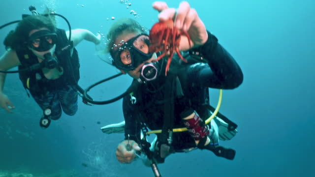 two women free trapped crab from discarded fishing ghost net whilst scuba diving - a helping hand stock videos & royalty-free footage