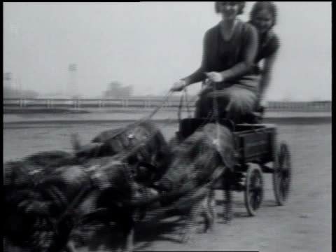 1931 MONTAGE Two women in a wagon being pulled by pigs