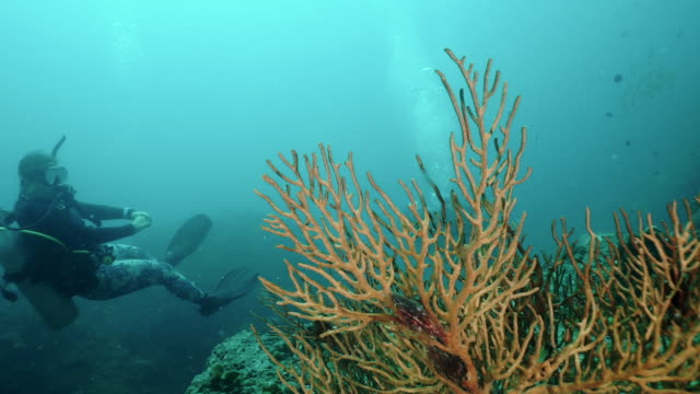 two women scuba diving on underwater coral reef environmental eco tourists - ross sea stock videos & royalty-free footage