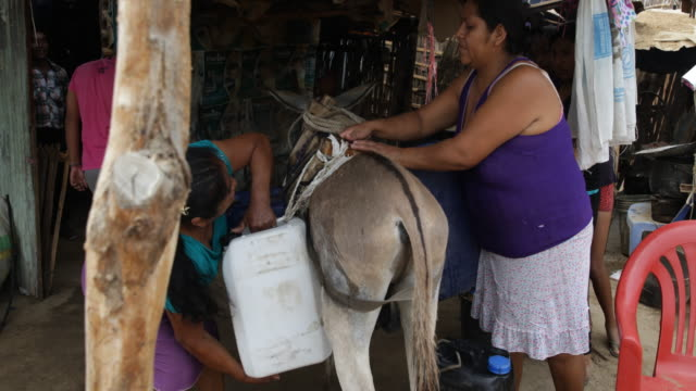 two women unloading water canisters from a donkey - esel stock-videos und b-roll-filmmaterial