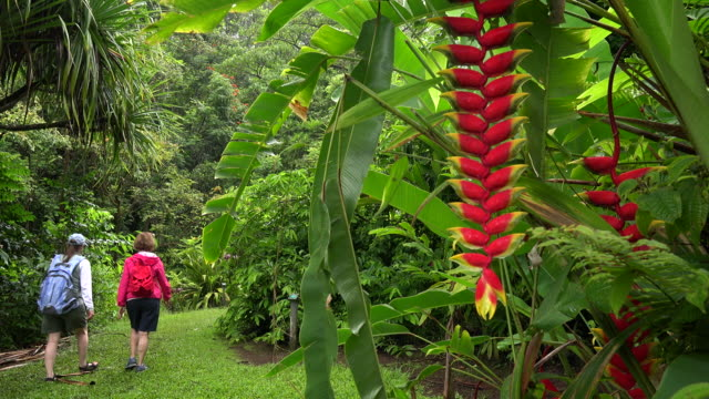 Two women walking through the rainforest of the Keanae Arboretum along the road to Hana in Maui, 4k ultra hd