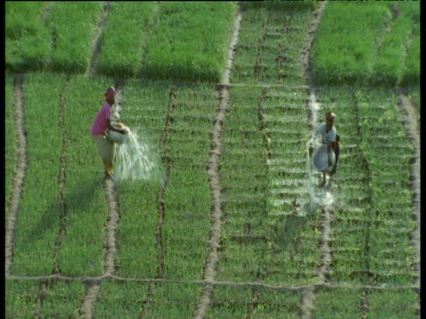 two women water fields using buckets, one flicks water into specific areas, the other splashes water everywhere, mali - マリ点の映像素材/bロール