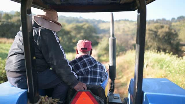 vidéos et rushes de deux ouvriers sur le tracteur allant travailler dans un domaine organique - mexique