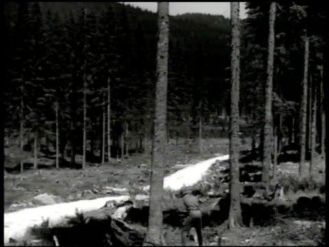 two workers w/ axes walking, forest, mountains bg. tree cutters chopping down tree. piles of logs. worker putting lumber on conveyor. vs woman w/ saw... - 木材産業点の映像素材/bロール