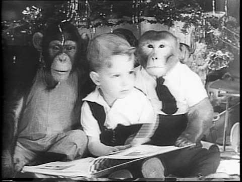 Two yearold Marc Maison and pet monkeys Henrietta and Herman looking out a window / Gil Maison wife Marc and monkey in the living room around the...