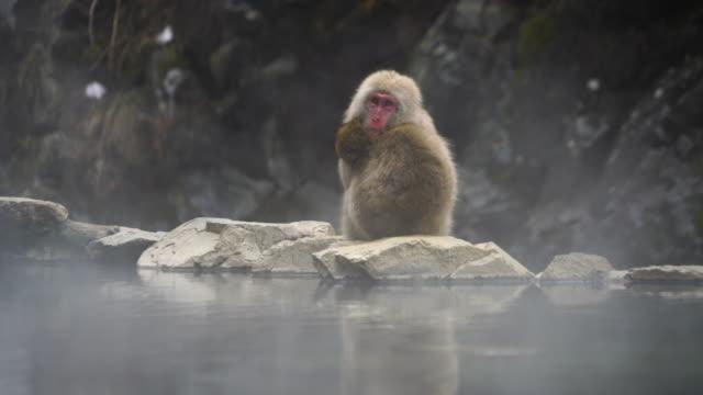 two young snow monkeys embrace each other and sit down at edge of the hot spring bathtub among the snowy mountain in jigokudani snow monkey park (jigokudani-yaenkoen) at nagano japan on feb. 19 2019. - 温泉点の映像素材/bロール