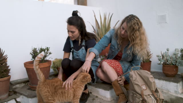 two young women sitting in front of house, petting cat - tranquility stock videos & royalty-free footage