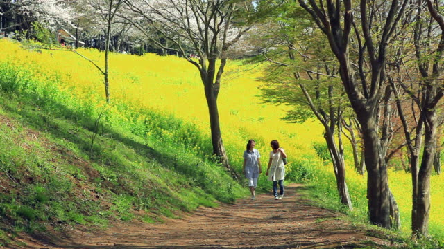 WS Two young women walking on footpath on flowering hill / Futtsu, Chiba, Japan
