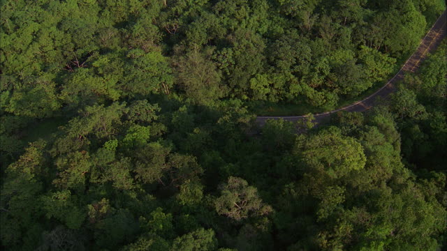 AERIAL Two-lane highway winding through forest