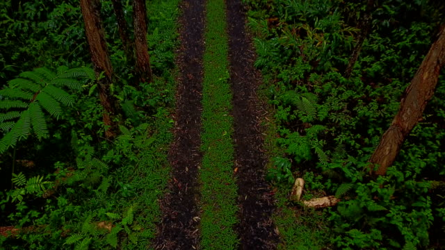 Two-Track Dirt Road Extending Off into Forest on Maui Island