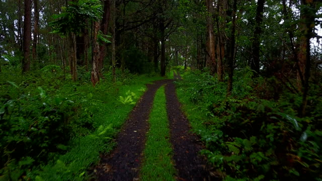 Two-Track Dirt Road Running Off into Thick Woods on Maui