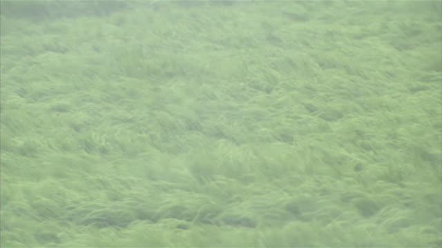 typhoon goni torrential downpour - satoyama scenery stock videos & royalty-free footage