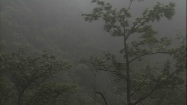 typhoon in yakushima. - torrential rain stock videos & royalty-free footage