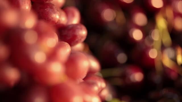 ms pan typical brazilian fruits cherries and grapes / sao paulo, brazil - ぶどう点の映像素材/bロール