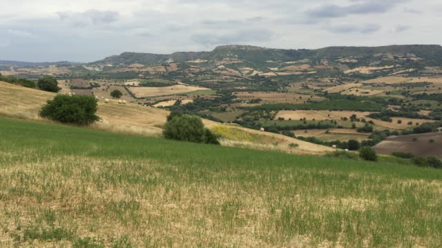 typical sicilian rural landscape in springtime not far from syracuse, sicily - なだらかな起伏のある地形点の映像素材/bロール