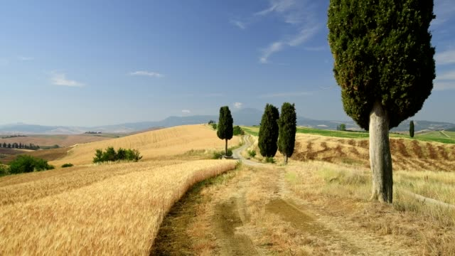 vidéos et rushes de typical tuscan countryside with field path and cypress trees, pienza, val d'orcia, siena province, tuscany, italy - route à une voie