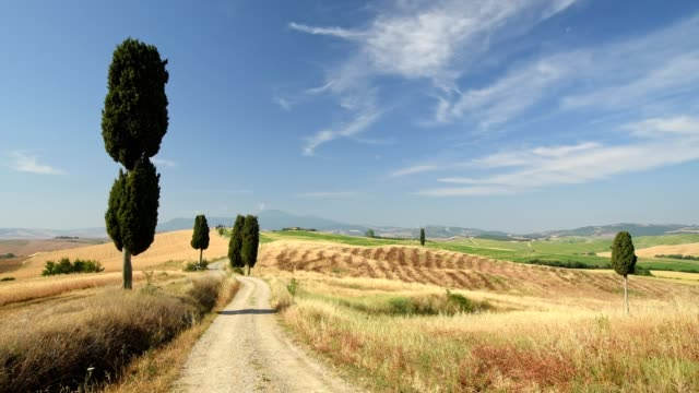 Typical tuscan countryside with gravel road and cypress trees, Pienza, Val d'Orcia, Siena Province, Tuscany, Italy