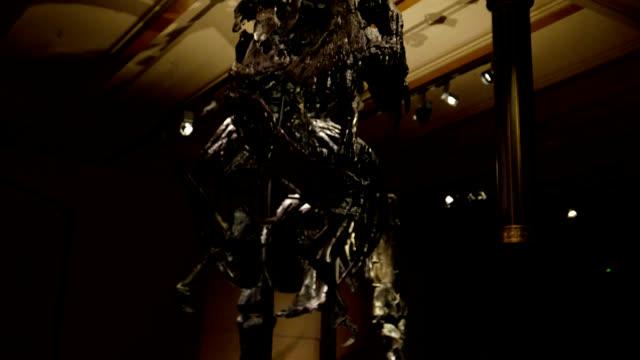 Tyrannosarus Rex (T Rex) Dolly shot around skeleton