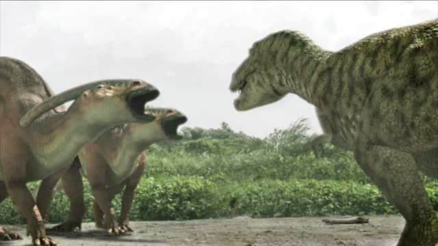 stockvideo's en b-roll-footage met a tyrannosaurus rex and parasaurolophuses call to each other in a computer-generated animation. - reptiel
