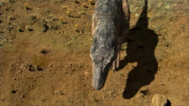 cgi, ms, ha, tyrannosaurus rex approaching to dead pterosaurs lying on ground - tyrannosaurus rex stock videos and b-roll footage