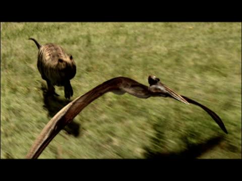 vídeos de stock e filmes b-roll de cgi, composite, tyrannosaurus rex chasing a flying pterodactyl  - evolução
