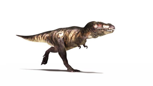 tyrannosaurus rex dinosaur animation. rgb and image mask available upon request - 恐竜点の映像素材/bロール