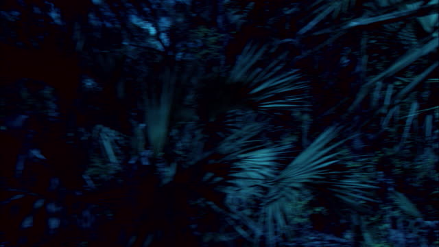 a tyrannosaurus rex prowls a jungle under a full moon. - dinosaur stock videos & royalty-free footage