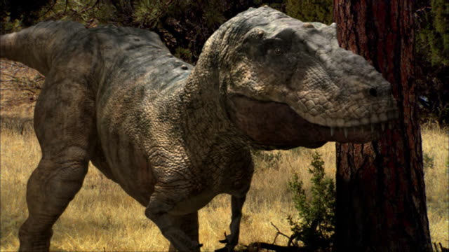 cgi, cu, tyrannosaurus rex standing in forest - tyrannosaurus rex stock videos and b-roll footage