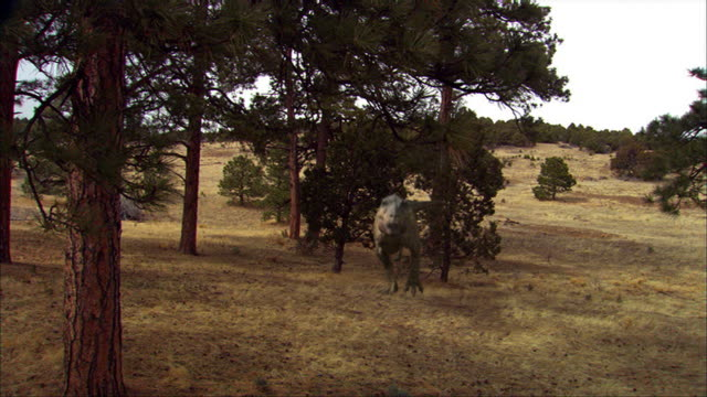 cgi, ms, tyrannosaurus rex walking in field - tyrannosaurus rex stock videos and b-roll footage