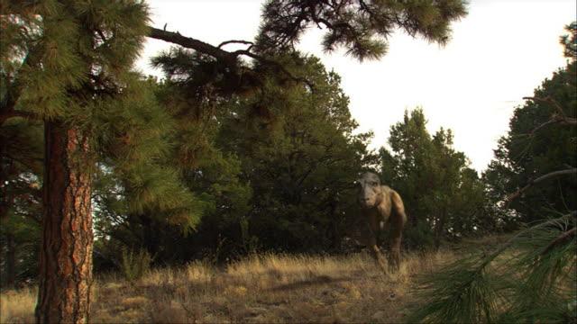 vídeos de stock, filmes e b-roll de cgi, ms, tyrannosaurus rex walking toward camera - jurássico