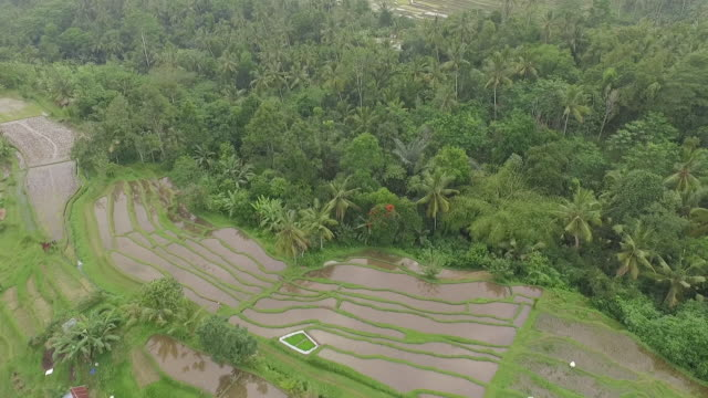 ubud bali. - north bali stock videos & royalty-free footage