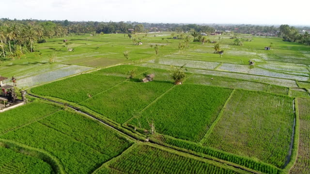 ubud bali. - ubud district stock videos & royalty-free footage