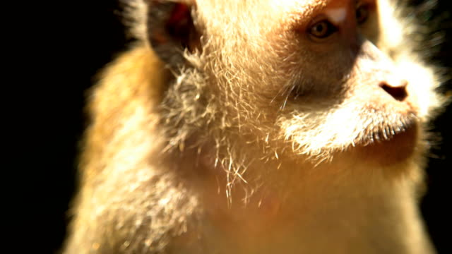 stockvideo's en b-roll-footage met ubud monkey forest sanctuary in tropical rainforest bali - dierenverzorging
