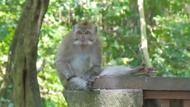 ubud monkey forest,bali,indonesia - ubud district stock videos & royalty-free footage