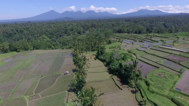 ubud paddy terrace. - agricultural cooperative stock videos and b-roll footage