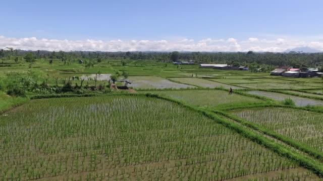 ubud paddy terrace. - ubud district stock videos & royalty-free footage