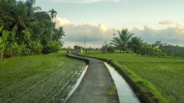 ubud rice paddies landscape, bali, indonesia - 4k time lapse - ubud district stock videos & royalty-free footage