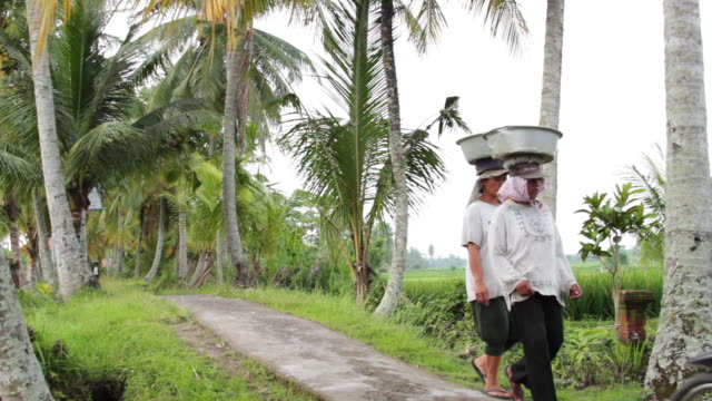 ubud scenes 3 - indonesia stock videos & royalty-free footage