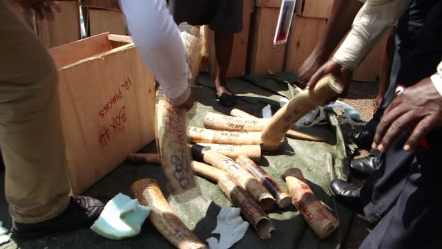 ugandan officials confiscating thousands of dollars in elephant ivory as the world cracks down on the ivory tusk trade. - 厚皮動物点の映像素材/bロール